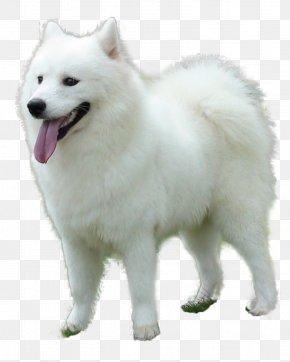 The Tongue Of The Puppy - German Spitz Klein German Spitz Mittel Volpino Italiano Japanese Spitz Samoyed Dog PNG