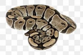 Snake - Snake Boa Constrictor Reptile PNG