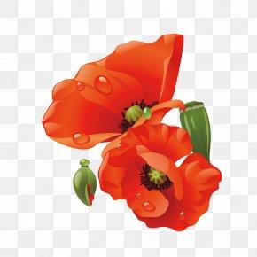 Flowers Bouquet - Poppy Paper Flower PNG
