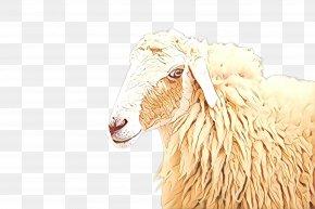 Livestock Goats - Cartoon Sheep PNG