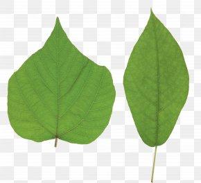 Green Leaf - 2017 Nissan LEAF Green PNG