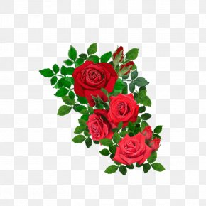 Red Rose - Beach Rose Flower Clip Art PNG