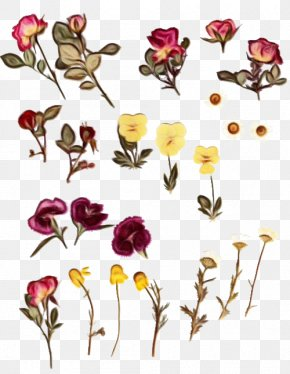 Wildflower Herbaceous Plant - Bouquet Of Flowers Drawing PNG