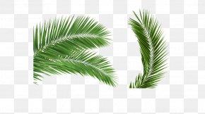 Free Stock Photos Coconut Buckle - Arecaceae Palm Branch Leaf Coconut Clip Art PNG