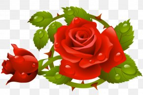 Muttertag Psd - Rose Vector Graphics Stock Photography Clip Art Royalty-free PNG