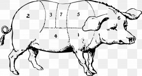Guinea Pig - Vietnamese Pot-bellied Large White Pig Drawing Clip Art PNG