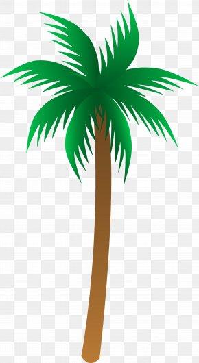 Palm Tree - Arecaceae Euclidean Vector Clip Art PNG