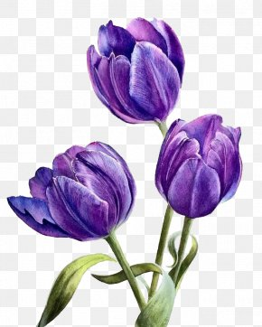 Watercolor Flowers - Flower Purple PNG