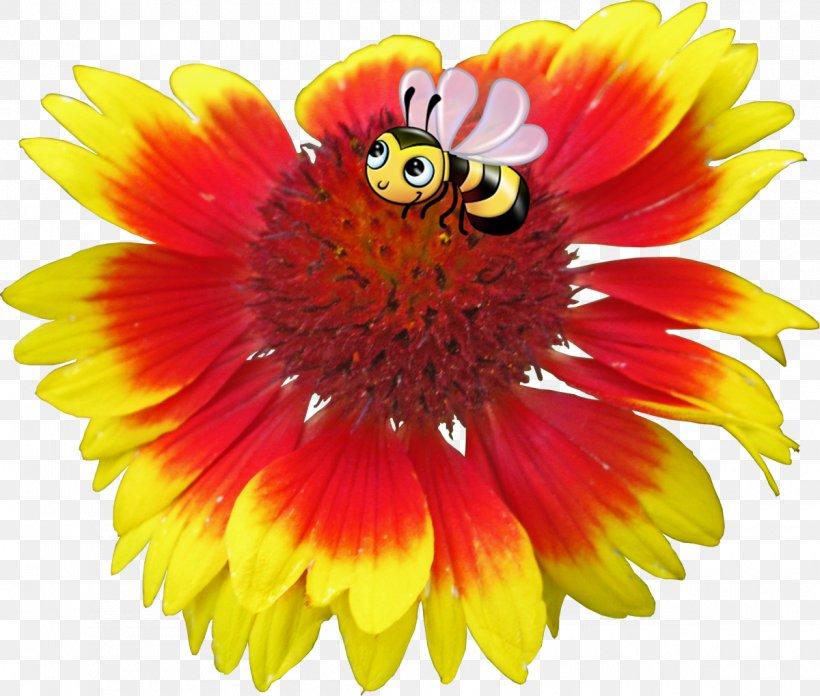 Blanket Flowers Petal Image, PNG, 1200x1019px, Blanket Flowers, Annual Plant, Blanket, Close Up, Cut Flowers Download Free