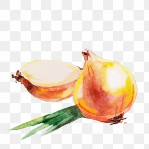 Onion - Red Onion Watercolor Painting Drawing PNG