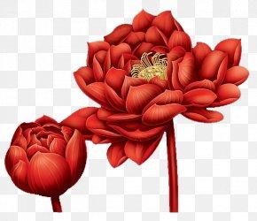 Blood Red Lotus - Garden Roses Red Illustration PNG
