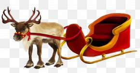 Christmas Reindeer And Sleigh Picture - Rudolph The Red-Nosed Reindeer PNG