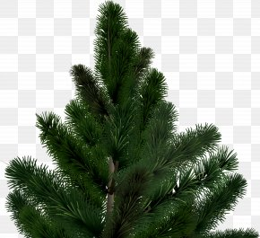 Fir-tree Image - Pine Christmas Tree Conifer Cone PNG
