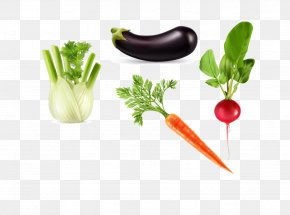 Vector Eggplant Carrot - Vegetable Auglis Asparagus PNG