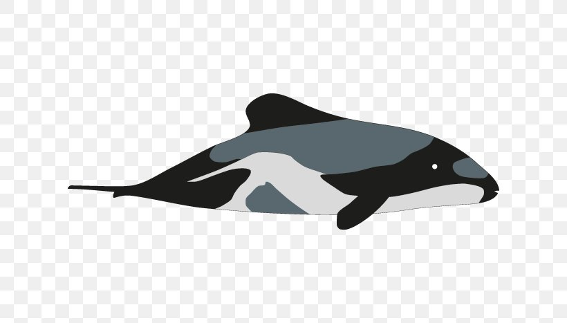 Hector S Dolphin Porpoise Killer Whale Drawing Png