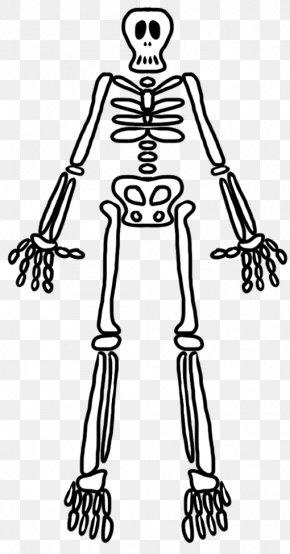 Finger Human Skeleton Homo Sapiens Bone PNG