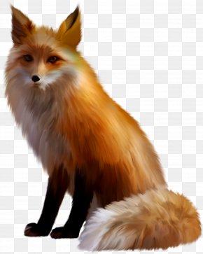 Fox - Cat German Spitz Fox Gray Wolf Ear PNG