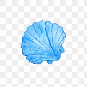 SEA SHELL - Seashell Watercolor Painting Photography Royalty-free PNG