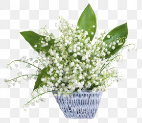 Lily Of The Valley - Lily Of The Valley Flower Desktop Wallpaper France 1 May PNG