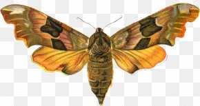 Honey Bee - Butterfly Insect Animal Moth PNG