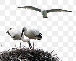 Birds Animals Stork - White Stork Bird Crane PNG