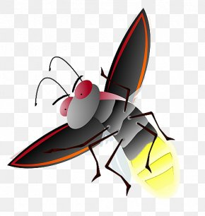 Firefly File - Clip Art PNG