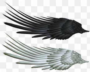 Evil Photos - Wing Angel Bird PNG