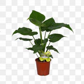 Leaf - Leaf Flowerpot Houseplant Plant Stem PNG