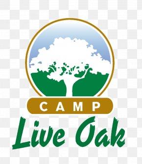 Summer Camp Summer Discount - Hugh Taylor Birch State Park Camp Live Oak Summer Camp Recreation Camping PNG