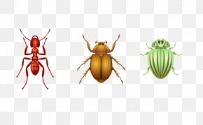 Insect - Insect Ladybird Euclidean Vector Drawing PNG