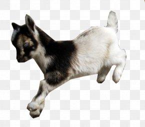 Dwarf - American Lamancha Goat Nigerian Dwarf Goat Fainting Goat Cat Animal PNG