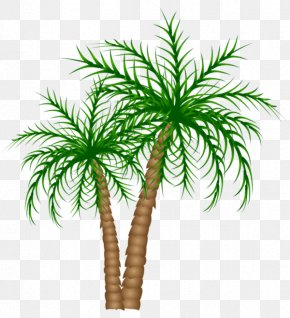 Green Coconut Tree - Arecaceae Tree Date Palm Clip Art PNG