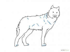 Easy Wolf Drawings - Gray Wolf Drawing Pencil Sketch PNG