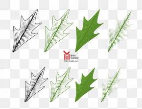 Leaf - Leaf Grasses Plant Stem Family PNG