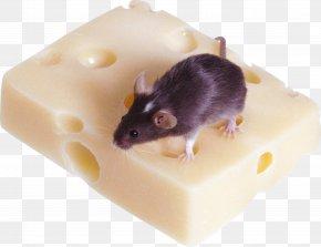 Mouse, Rat Image - Nasi Goreng Indonesian Cuisine Hainanese Chicken Rice Nasi Lemak Nasi Campur PNG