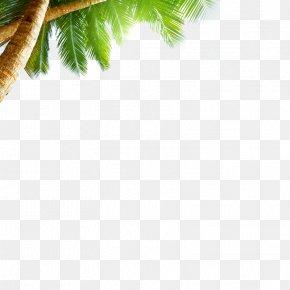 Coconut Tree - Beach Sea Sky AliExpress Wallpaper PNG
