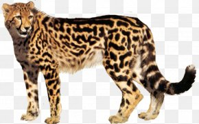 Cheetah - Cheetah Clip Art Transparency Desktop Wallpaper PNG