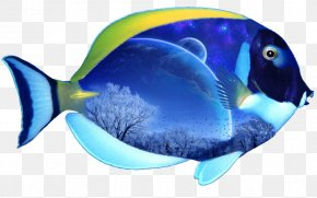 Fish 6 - El Grullo Marine Biology Coral Reef Fish Marine Mammal Poster PNG