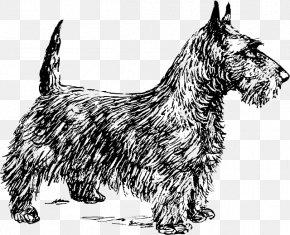 Scottish Terrier Smooth Fox Terrier Cairn Terrier Yorkshire Terrier Boston Terrier PNG