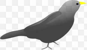 Blackbird Cartoon - Clip Art Desktop Wallpaper Image PNG