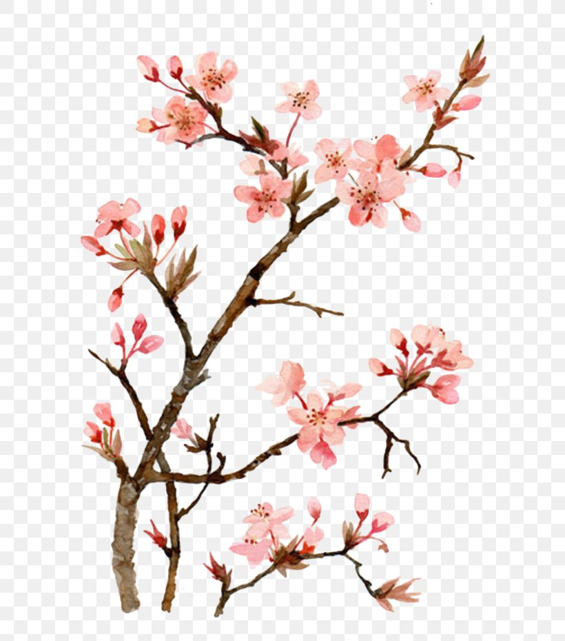 Cherry Blossom Watercolor Painting Drawing, PNG, 700x930px, Cherry Blossom, Abstract Art, Art, Blossom, Branch Download Free