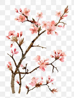 Drawing Peach - Cherry Blossom Watercolor Painting Drawing PNG