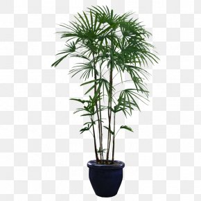 Potted Plants - Houseplant Tree PNG