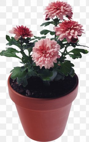 Flower Pot - Photography Clip Art PNG
