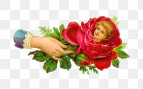 Baby Roses Cliparts - Garden Roses Victorian Era Flower Clip Art PNG