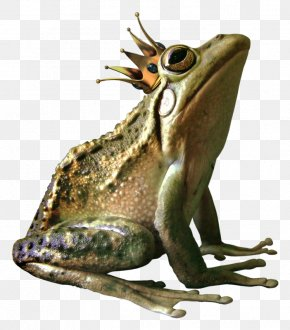 Frog Prince - American Bullfrog Crown PNG