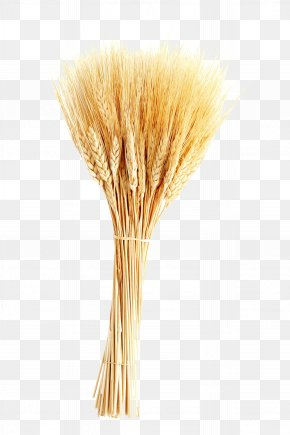 Wheat - Wheat Ear Barley Icon PNG