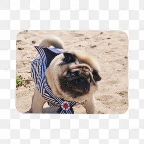 Pug Watercolor - Pug Dog Breed Toy Dog Snout Sailor PNG