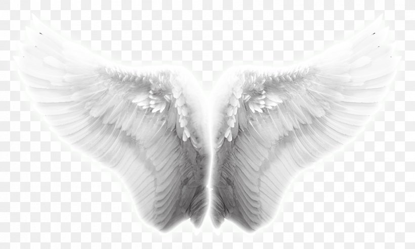 Angel Wing Icon, PNG, 997x600px, Wing, Angel, Angel Wing, Black And White, Close Up Download Free