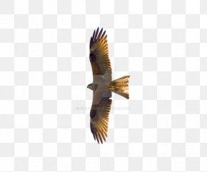 Flying Eagles PNG